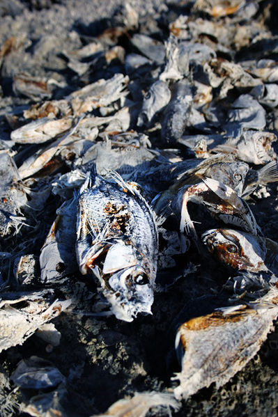 Dead Fish Photo By Gentle This Drought Is Killing Millions Of Fish And Is Rapidly Drying Up The Mighty Mississippi
