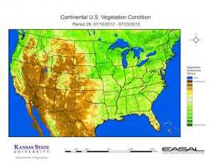 Kansas State University U.S. Vegetation Condition 300x231 Kansas State University   U.S. Vegetation Condition