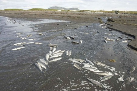 Fish Deaths 450x299 Why Are Millions Of Fish Suddenly Dying In Mass Death Events All Over The Planet?
