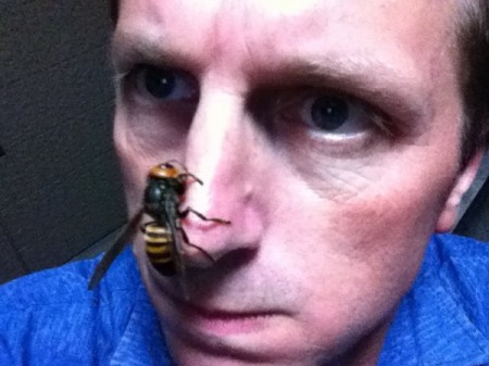 Asian Giant Hornet - Photo by Blogger Kurt Bell