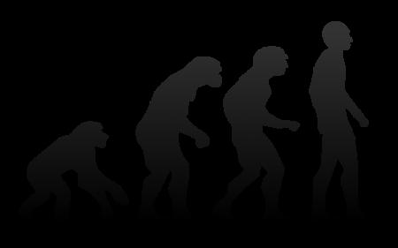 Evolution - Photo by Tkgd2007
